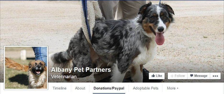 top of East Albany Animal Clinic Facebook page. profile background picture is an Australian Shepard receiving help to walk. profile picture is a tan and brown dog running through a field